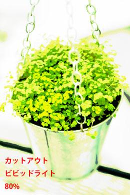 img_soft_color09_44.jpg