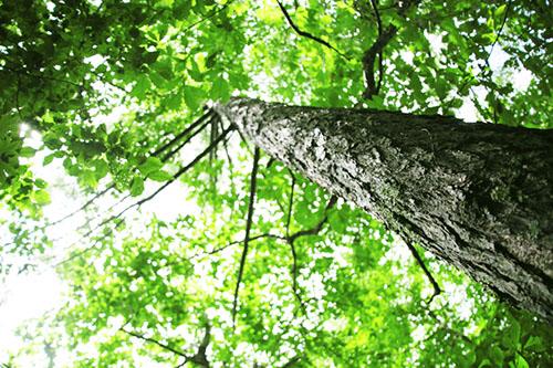 img_soft_nature03_26.jpg