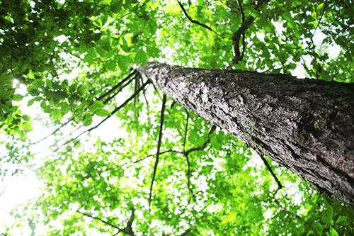 img_soft_nature03_30.jpg