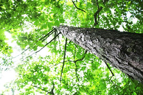 img_soft_nature03_47.jpg