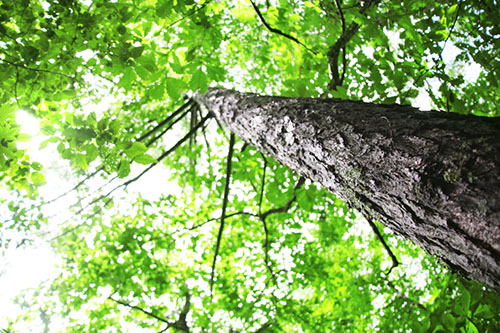 img_soft_nature03_52.jpg
