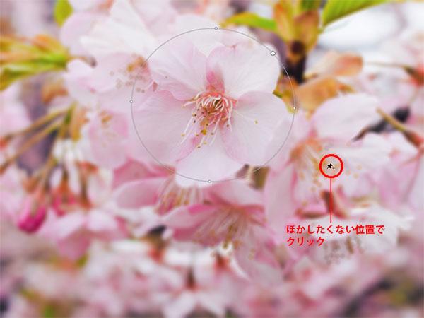 img_soft_nature08_23.jpg