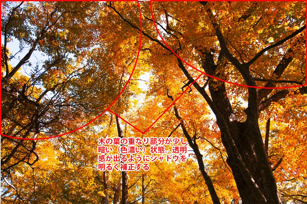img_soft_nature23_41.jpg