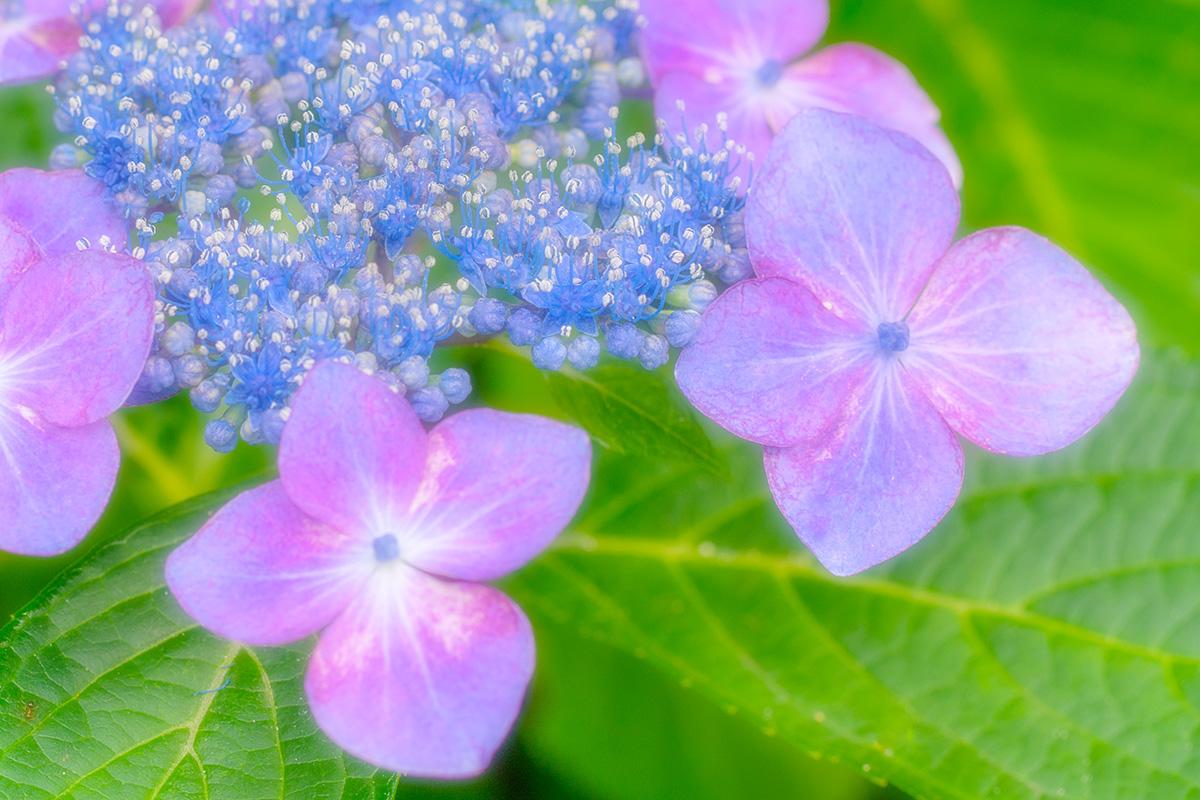 img_soft_nature2_01_03.jpg