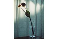 審査員は奥山由之、テーマは「Flower」|オンライン写真コンテスト IMA next #15