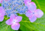 花やポートレイトに使えるやさしい描写のレシピ