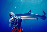 Cintel Scannerで何百時間もの水中映像をデジタル化|サメと遊ぶ伝説のダイバー